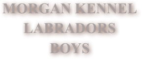 MORGAN KENNEL