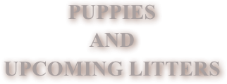 PUPPIES
